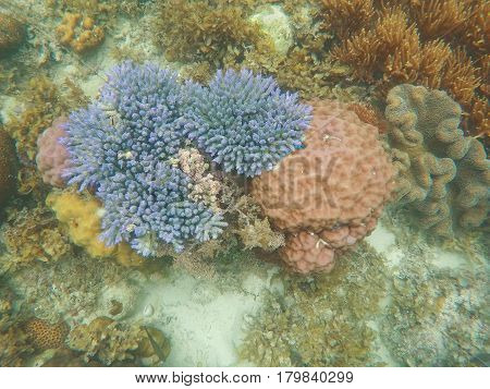 Coral reef underwater landscape. Blue and pink corals top view. Exotic seashore wild nature inhabitants. Diverse hard corals of tropical lagoon ecosystem. Snorkeling banner template with text place