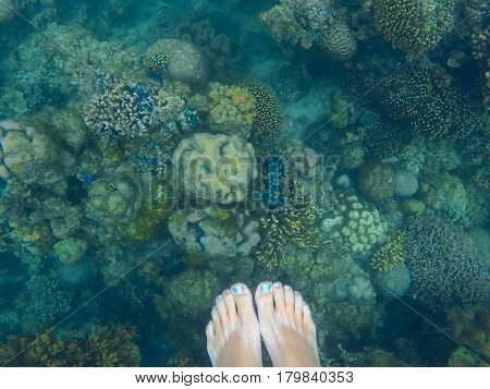 Coral reef with woman's feet above. Underwater photo with diverse corals. Female snorkel undersea scene. Blue and yellow tropical corals top view. Woman's feet with mermaid pedicure in deep blue sea