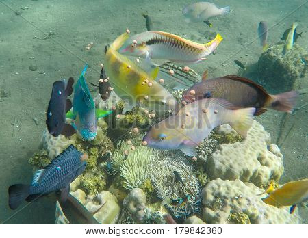 Underwater landscape with tropical fish. Feeding of aquarium fishes in wild nature. Coral reef sea animals. Butterfly fish thalassoma surgeonfish. Exotic island seashore. Undersea inhabitants photo