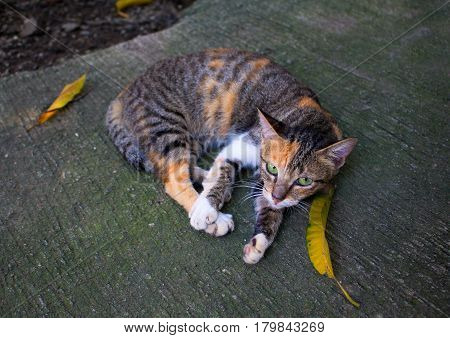 Wild homeless cat with yellow leaves. Abandoned domestic animal. Adopt cat concept photo. Three color kitty with green eyes. Domestic cat lost. Adoption of pet. City animal picture with text place