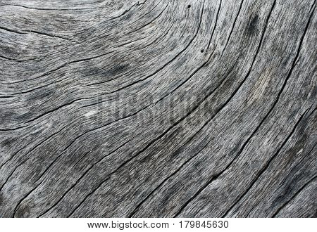 Weathered wood texture closeup photo. Pale grey wood background. White old tree near the sea. Curves and lines on natural rustic timber. Rough timber texture. Sea wood backdrop. Old weathered tree
