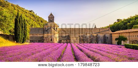 Abbey of Senanque and blooming rows lavender flowers panorama at sunset. Gordes Luberon Vaucluse Provence France Europe.