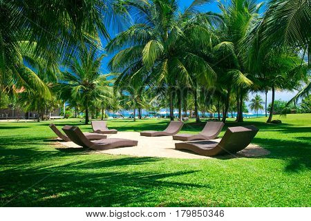 palm garden with grass