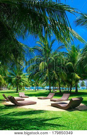 palm garden with grass