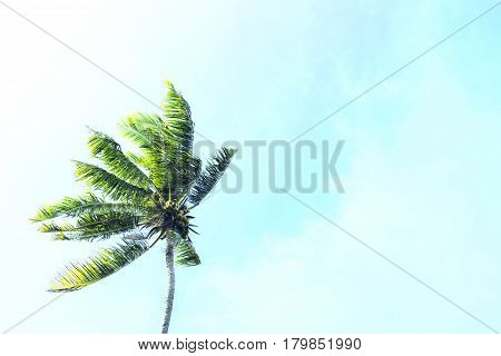 Coco palm tree on blue sky background. Sunny day on tropical island. Summer vacation banner template. Fluffy palm tree with green leaves. Coconut palms under sunlight. Exotic nature trendy toned photo