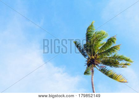 Palm tree and blue sky retro toned image. Tropical nature minimal photo for banner background. Single coco palm top view. Skyscape with coconut palm tree. Exotic island vacation day. Green palm leaf