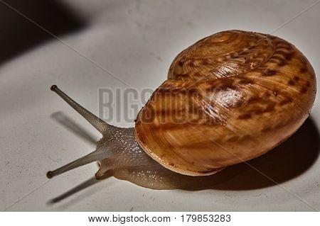 Snail Macro Photo