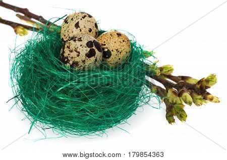Easter Eggs In Green Bird Nest  With Blooming Twigs.