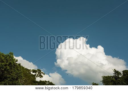 Blue Sky With Some Cloud and Tree Tips