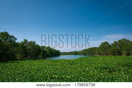 Landscape view of upcountry riverside at Thailand