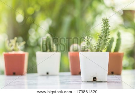 Closeup cactus in white plastic pot on mable table at the in front of house with blurred garden view textured background