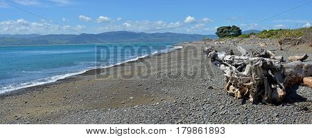 Panoramic view of the Kapiti Coast from Kapiti Island Bird Sanctuary. In the foreground is dramatic driftwood. In the background is Paraparaumu Waikanae and Raumati.