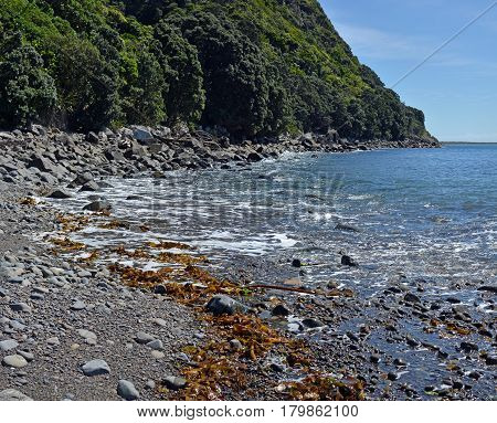 The rocky shoreline of Kapiti Island Bird Sanctuary New Zealand. In the foeground are pristine waters and freshly dumped seaweed shells and rocks.