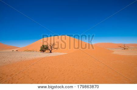 Dune 45, Sossusvlei, Namib-naukluft National Park, Namibia