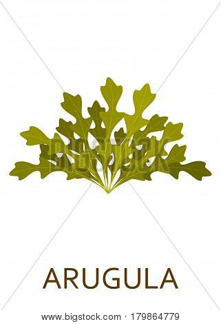 Green salad plant isolated on the white background. Vector illustration.