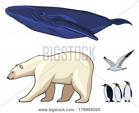 Colorful arctic animals set with polar bear cachalot seagull and penguins on white background isolated vector illustration