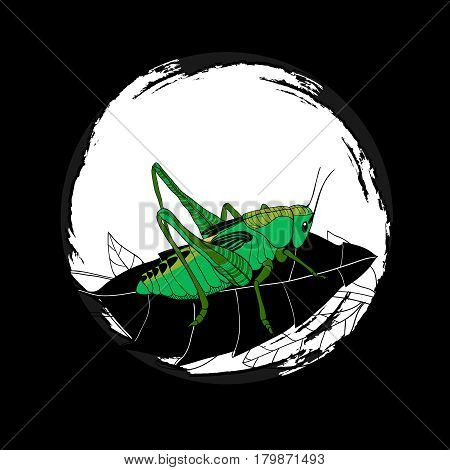 Hand drawn wild insect round composition with green grasshopper sitting on leaf vector illustration