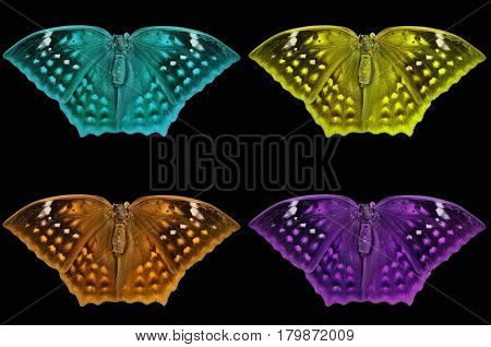 Beautiful color butterfly Isolated on black background