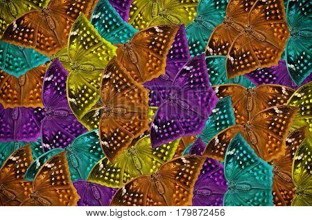 Many Beautiful muti colors butterfly use background