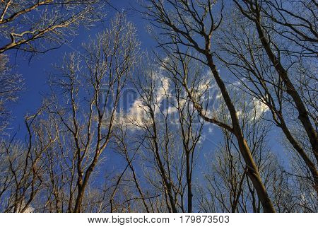 In the bare branches of the big trees in the spring park a small white cloud lurched against the background of a clear blue sky.