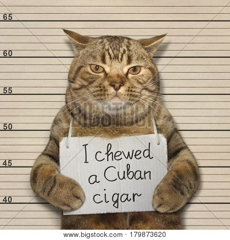 The bad cat chewed a Cuban cigar. He was arrested for it.