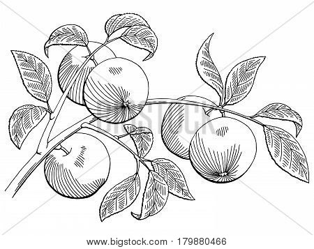 Apple graphic black white isolated sketch illustration vector