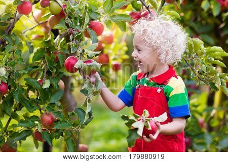 Little Boy Picking Apple In Fruit Garden