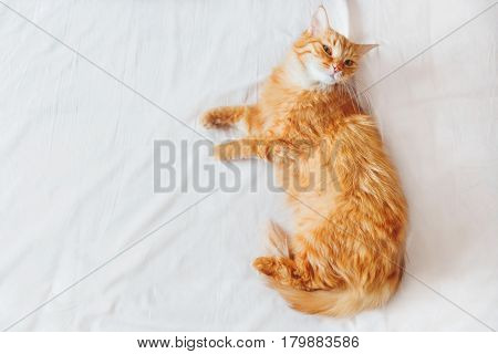 Cute ginger cat lying on the bed. Cute cozy background morning bedtime at home. Top view flat lay.