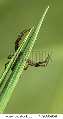 Spider Hunting On Grass