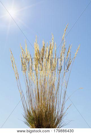 Autumn Sun And Grass