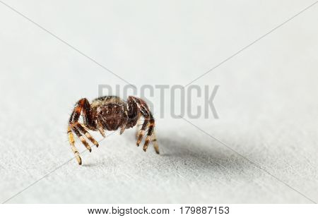 Macro en face of small spider on white blank paper