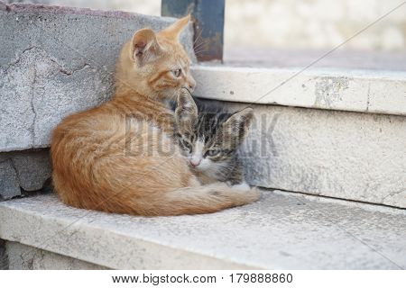 Two cute cats lying on stairs. Animals, pets concept.
