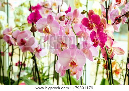 image of a beautiful pink orchid flower room