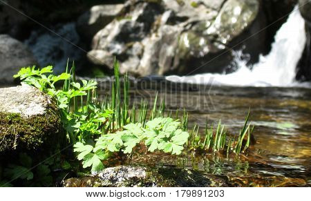 Grass in the river with a waterfall
