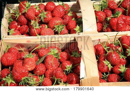 Strawberries in the punnet on natural background roses in country garden.