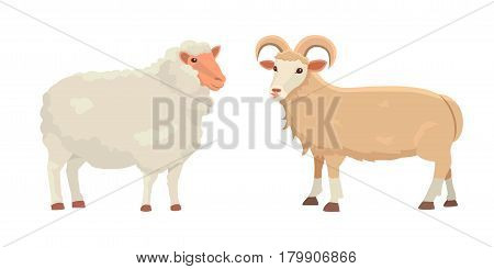 Vector set Cute Sheep and Ram isolated retro illustration. Standing Sheeps silhouette on white. Farm fanny milk young animals vector