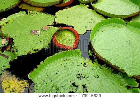 water lilly lake nature day exotic green
