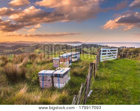 Colorful Bee Hives On Top Of A Hill In Bay Of Islands, New Zealand