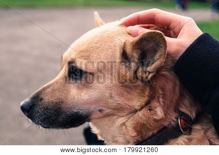 the dog pats the hand of the owner
