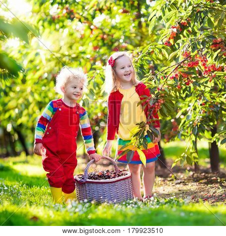 Kids Picking Cherry On A Fruit Farm Garden