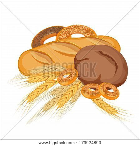 Set of bakery products with gold wheat and yellow rye on white background. Vector illustration of long loaf, brown tommy, three small bagels with sesame seeds and two big bagels with poppy and sesame.
