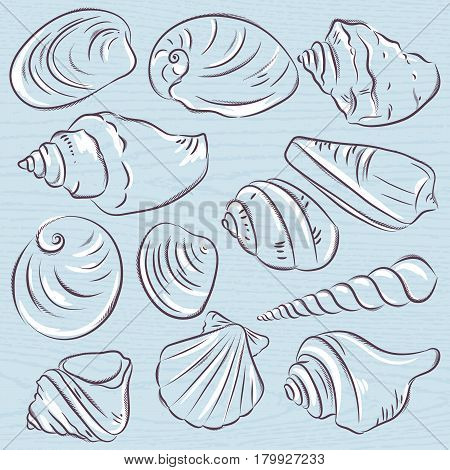 Set of different types of clams and shells on a blue grunge background vector illustration.