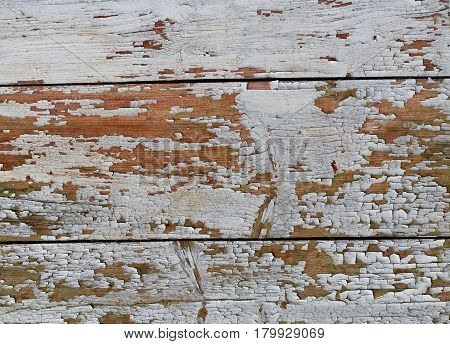 Wooden Background Texture with Weathering White Coating