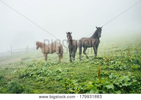 Three horses on a meadow with green grass in summer. Herd of horses on a meadow