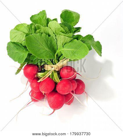 fresh radish bunch isolated over white background