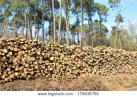 Deforestation environmental problem forest destroyed row of logs