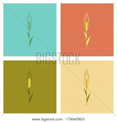 assembly of flat Illustrations plant natural triticum