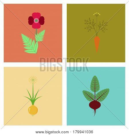 assembly of flat Illustrations papaver daucus carota allium beta