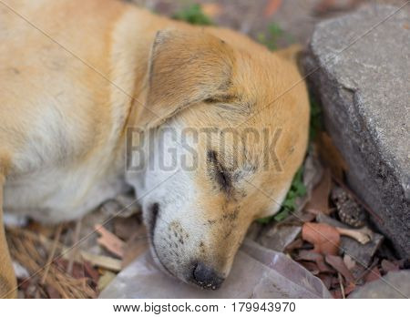 Young Dog Sleeping On The Garbage Heap