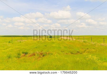 Paddock In The Flint Hills